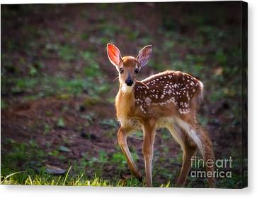 Bambi Canvas Print by Deborah Scannell