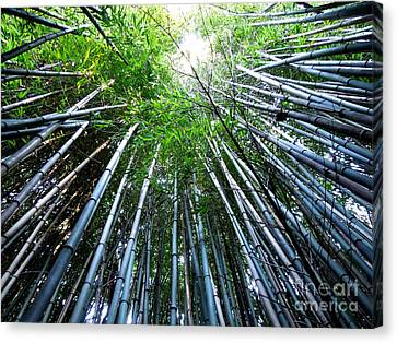 Bamboo . A Renewable Resource Canvas Print by Renee Trenholm
