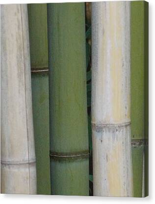 Bamboo 1 Canvas Print
