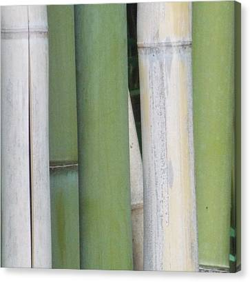 Bamboo 2 Canvas Print