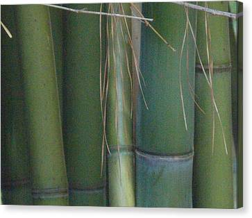 Bamboo 3 Canvas Print
