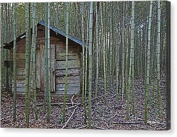 Bamboo Abandoned House Old Shed - Overtaken Canvas Print by Rebecca Korpita