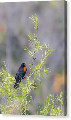 Bamboo And Bird Canvas Print