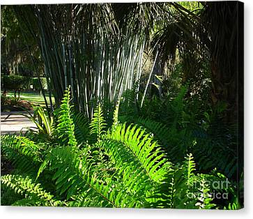 Bamboo House Canvas Print - Bamboo And Fern by Lew Davis