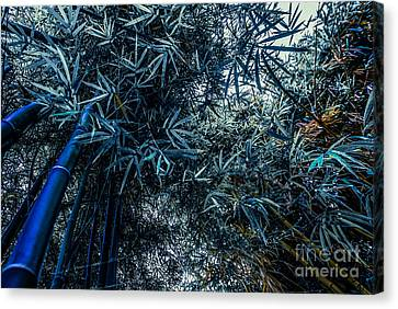 Bamboo - Blue Canvas Print by Hannes Cmarits