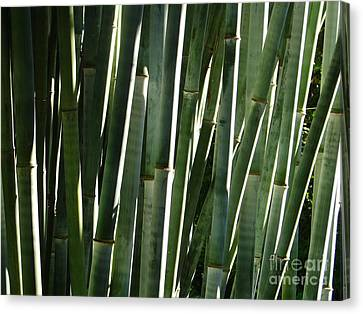 Bamboo House Canvas Print - Bamboo Canes by Lew Davis