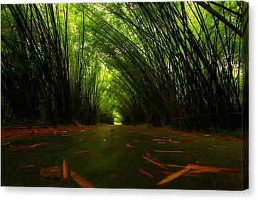 Bamboo Cathedral Canvas Print by Dexter Browne