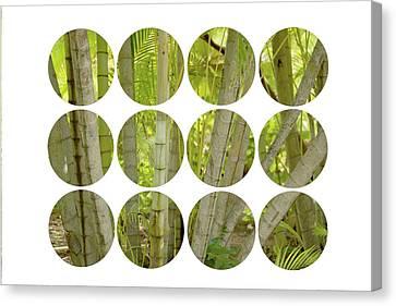 Bamboo Circles Canvas Print