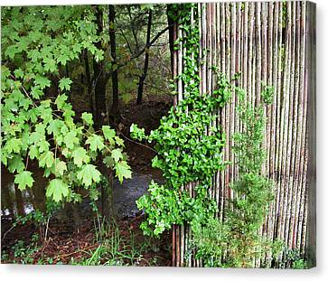 Bamboo Fence Canvas Print by Daniel P Cronin