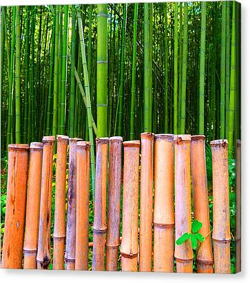 Canvas Print featuring the photograph Bamboo Fence by Julia Ivanovna Willhite