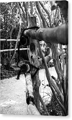 Bamboo Fence Canvas Print by Richard Taylor