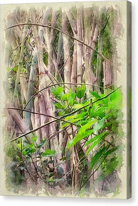 Bamboo Forest At Lamma Island Hong Kong Canvas Print by Yury Malkov