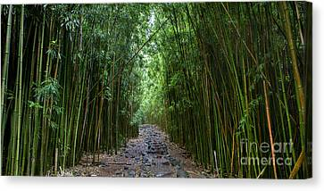 Bamboo Forest Trail Hana Maui Canvas Print by Dustin K Ryan