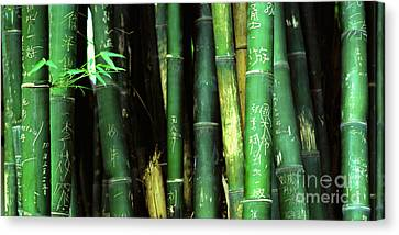 Bamboo Graffiti Pano - Sichuan Province Canvas Print by Anna Lisa Yoder