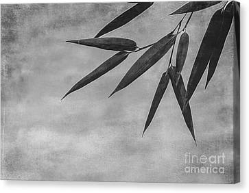 Bamboo - Gray Canvas Print by Hannes Cmarits