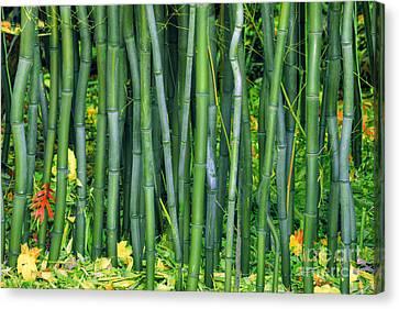 Bamboo Greens Canvas Print