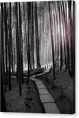 Bamboo Grove At Dusk Canvas Print