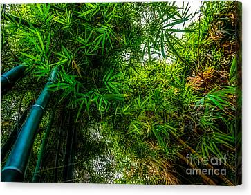 bamboo III - green Canvas Print by Hannes Cmarits