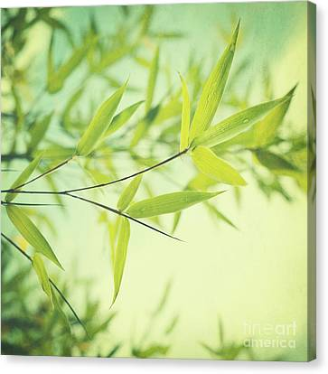 Leaves Canvas Print - Bamboo In The Sun by Priska Wettstein