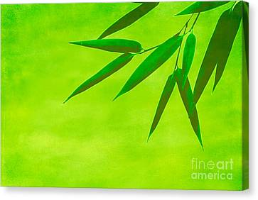 Bamboo Leaves Canvas Print by Hannes Cmarits