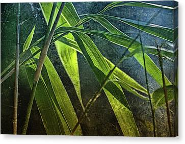 Bamboo-lights Canvas Print