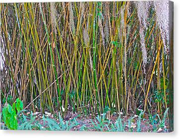 Canvas Print featuring the photograph Bamboo by Lorna Maza