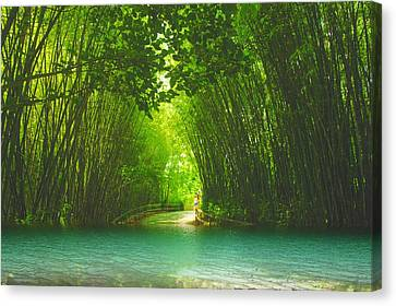 bamboo path to  Blue Lagoon  Canvas Print by Dennis Baswell