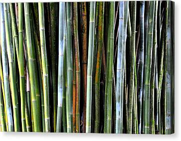 Canvas Print featuring the photograph Bamboo Rainbow by Jodi Terracina