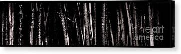Ron Smith Canvas Print - Bamboo by Ron Smith