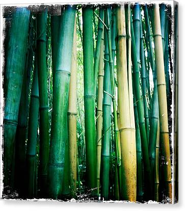 Bamboo Canvas Print by Sarah Coppola