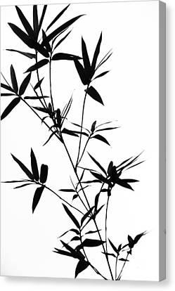 Bamboo Shadows Canvas Print by Jenny Rainbow