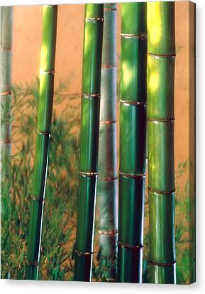 Bamboo Sticks Canvas Print
