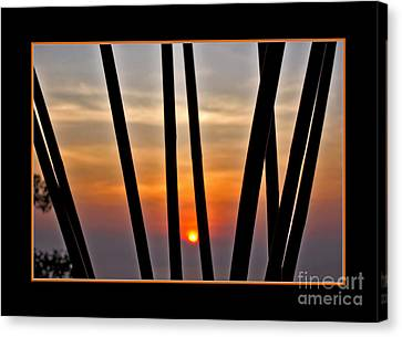 Bamboo Sunset - Black Frame Canvas Print by Kaye Menner