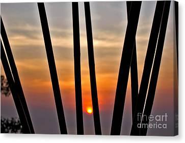 Bamboo Sunset Canvas Print