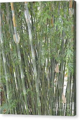 Bamboo Canvas Print by To-Tam Gerwe