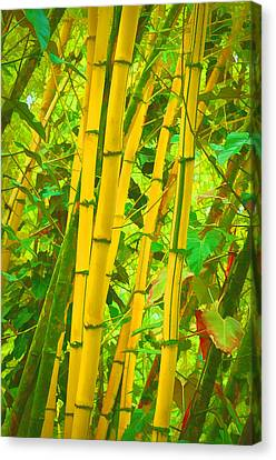 Bamboo Trees Canvas Print by Art Brown