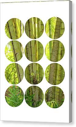 Bamboo Trees Canvas Print