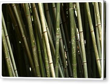 Bamboo Wall Canvas Print