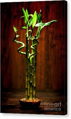 Bambooesque  Canvas Print by Olivier Le Queinec