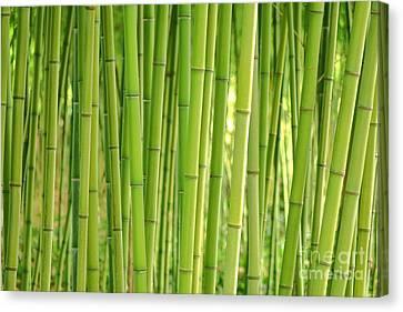 Bamboorama  Canvas Print