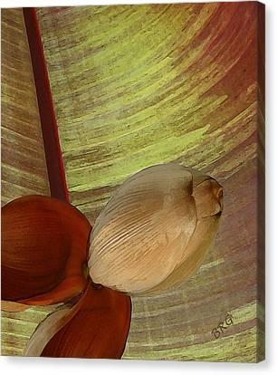 Banana Composition I Canvas Print by Ben and Raisa Gertsberg