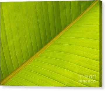 Banana Leaf Diagonal Pattern Close-up Canvas Print by Anna Lisa Yoder