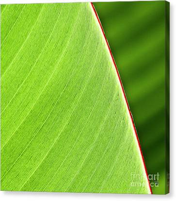 Banana Leaf Canvas Print by Heiko Koehrer-Wagner