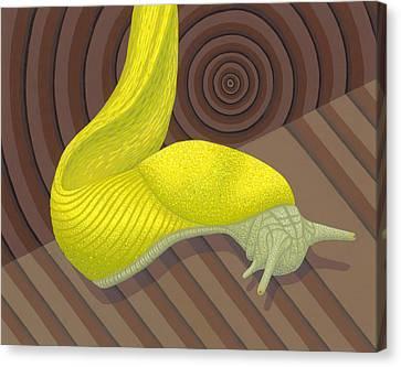 Slug Canvas Print - Banana Slug by Nathan Marcy