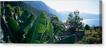 Banana Trees In A Garden Canvas Print by Panoramic Images