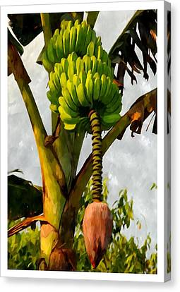 Banana Trees With Fruits And Flower In Lush Tropical Garden Canvas Print by Lanjee Chee