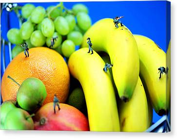 Band Of Brothers Among Fruits Jungle Little People On Food Canvas Print