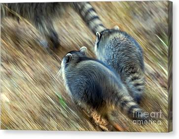 Bandits On The Run Canvas Print