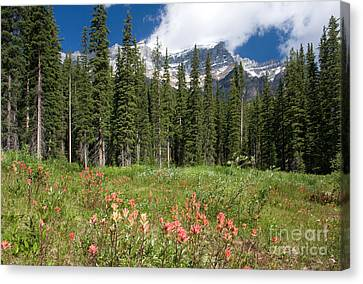 Canvas Print featuring the photograph Banff Wildflowers by Chris Scroggins