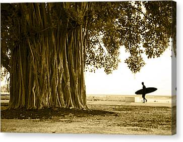 Banyan Surfer Canvas Print